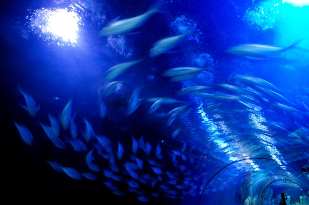 Valencia Oceonografic aquarium