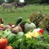 Un weekend dans une ferme de charme normande à gagner