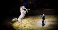 Un fabuleux spectacle équestre au cirque Alexis Gruss